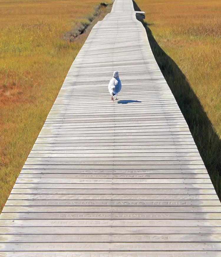Boardwalk in Sandwich Massachusetts